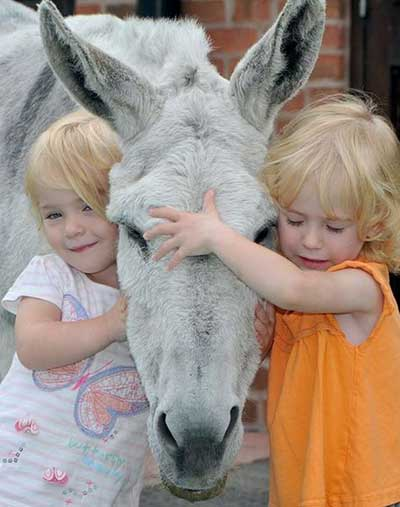 donkey-work-to-help-sick-childrent