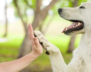 corso-operatore-pet-therapy